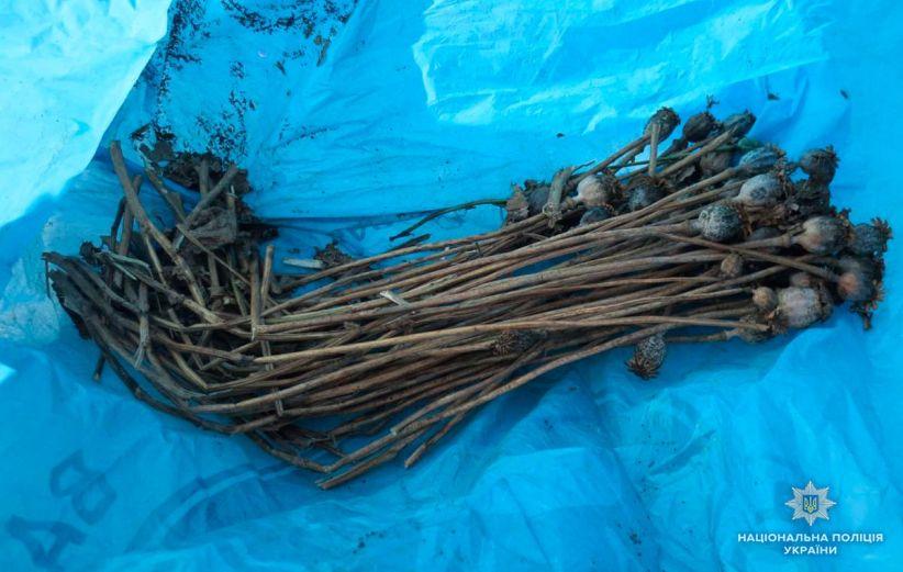 На Буковині правоохоронці знову виявили кілька випадків вирощування маку