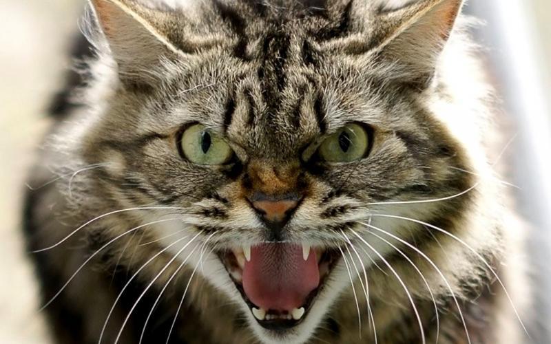 У Харкові троє людей постраждали через скажених котів