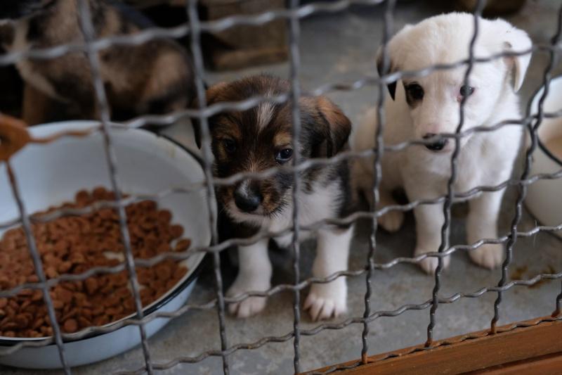 У Чернівцях на будівництво третьої черги притулку для тварин передбачено понад 1,5 млн. гривень
