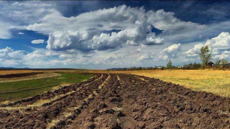 До законопроєкту про ринок землі подали понад 2 тисячі правок