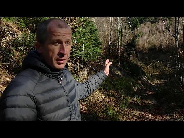 У Вижницькому національному парку під виглядом санітарних рубок нищать здорові дерева, – активіст