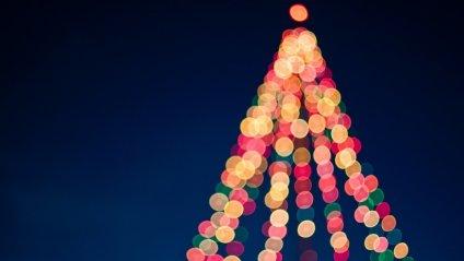 У Чернівцях на новорічні свята буде штучна ялинка