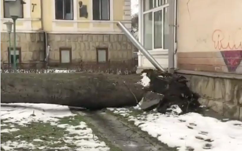 У Чернівцях на території навчального закладу впало дерево (відео)