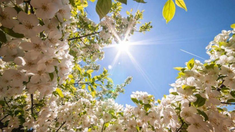 Літнє тепло в Чернівцях. Якою буде погода 26 квітня?