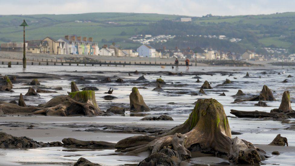 Після урагану в Уельсі море відступило, показавши скам'янілий ліс