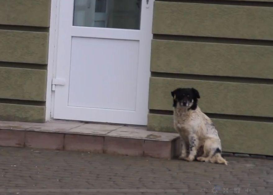 У Чернівцях обговорять проблему з безпритульними тваринами