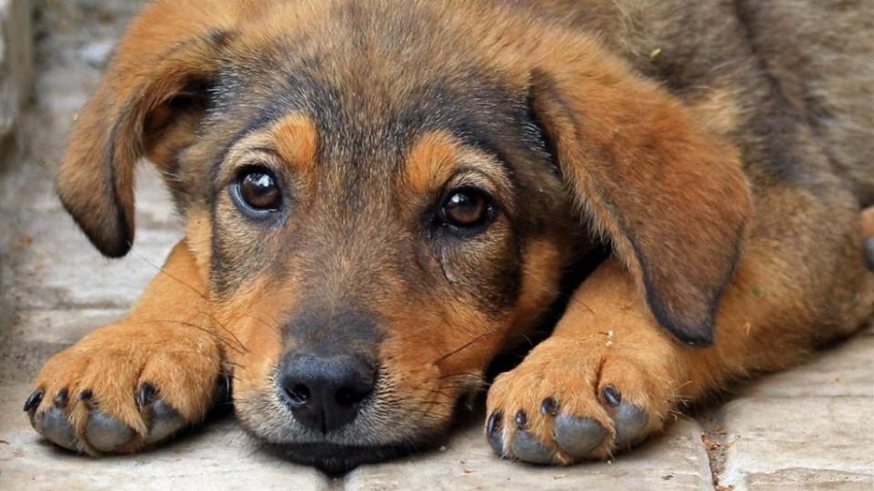 У Чернівцях протягом трьох днів відбудеться підрахунок безпритульних собак