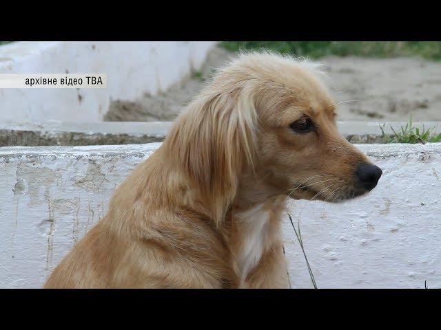 Кількість безпритульних тварин у Чернівцях може сягати 8 тисяч