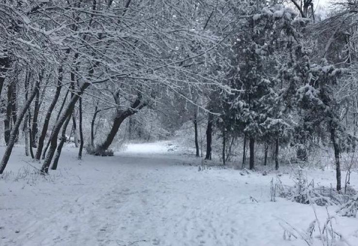 Ожеледиця та сильний сніг. На Буковині оголосили штормове попередження