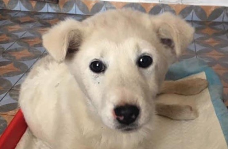 На Герцаївщині за знущання над собакою двох чоловіків можуть посадити за ґрати – поліція
