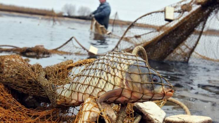 Виловив риби на 12 тисяч гривень: на Буковині задокументували правопорушення