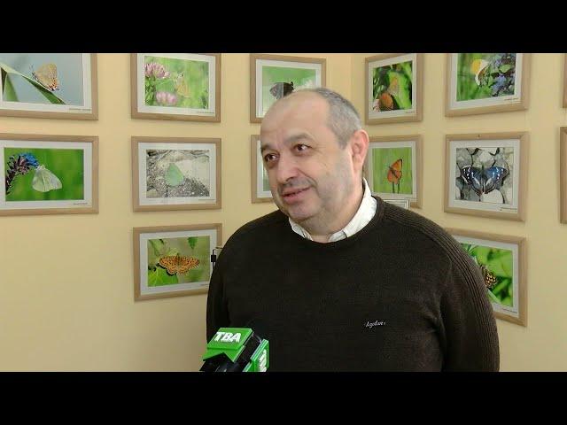 Експозицію метеликів представили у Чернівецькому обласному краєзнавчому музеї