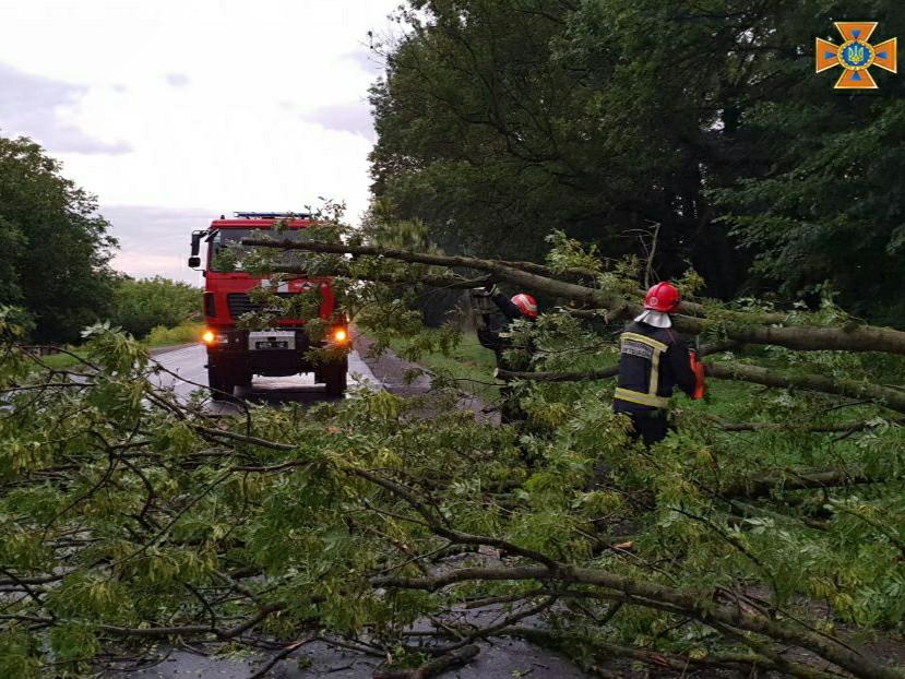 Негода на Буковині: рятувальники розпилювали масово повалені дерева