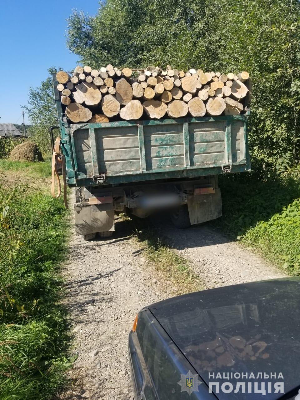 Незаконно вивозили букові дерева: буковинські правоохоронці зупинили зловмисників