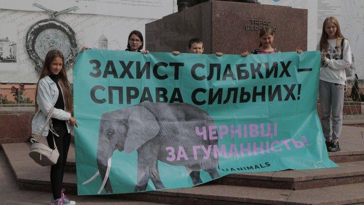 """Захист слабких справа сильних"": у Чернівцях провели марш за права тварин"